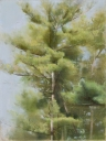 Pines, Summer, 2008 | Oil on canvas, 12 x 9 in. | Sold