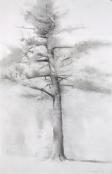 study-for-big-pine-1