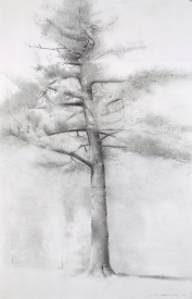 Christopher Gallego, American, b. 1959, 2007, charcoal and graphite on paper, 12 x 21 in.